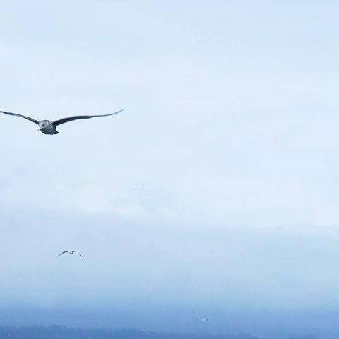 bird-sky-sea-minimalisme