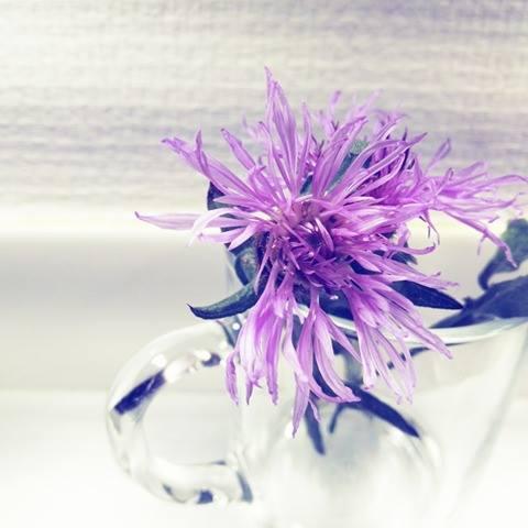 flower-minimalism