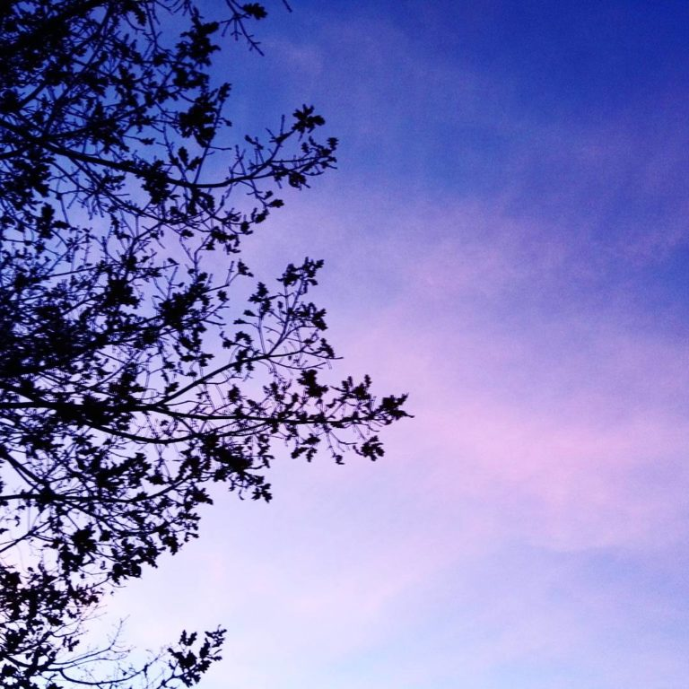 sky-tree-purple