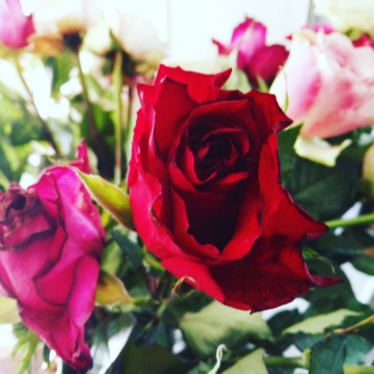 flowers-roses