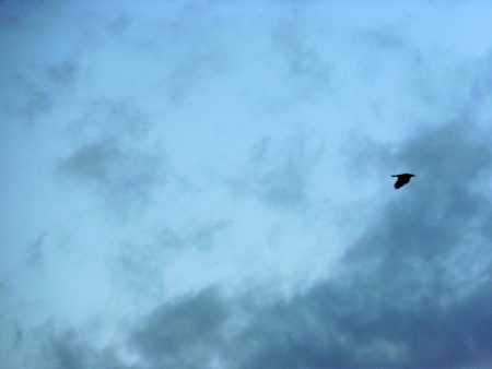 bird-blue-sky