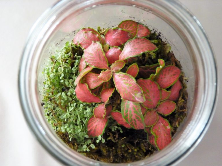 diy-bocal-terrarium